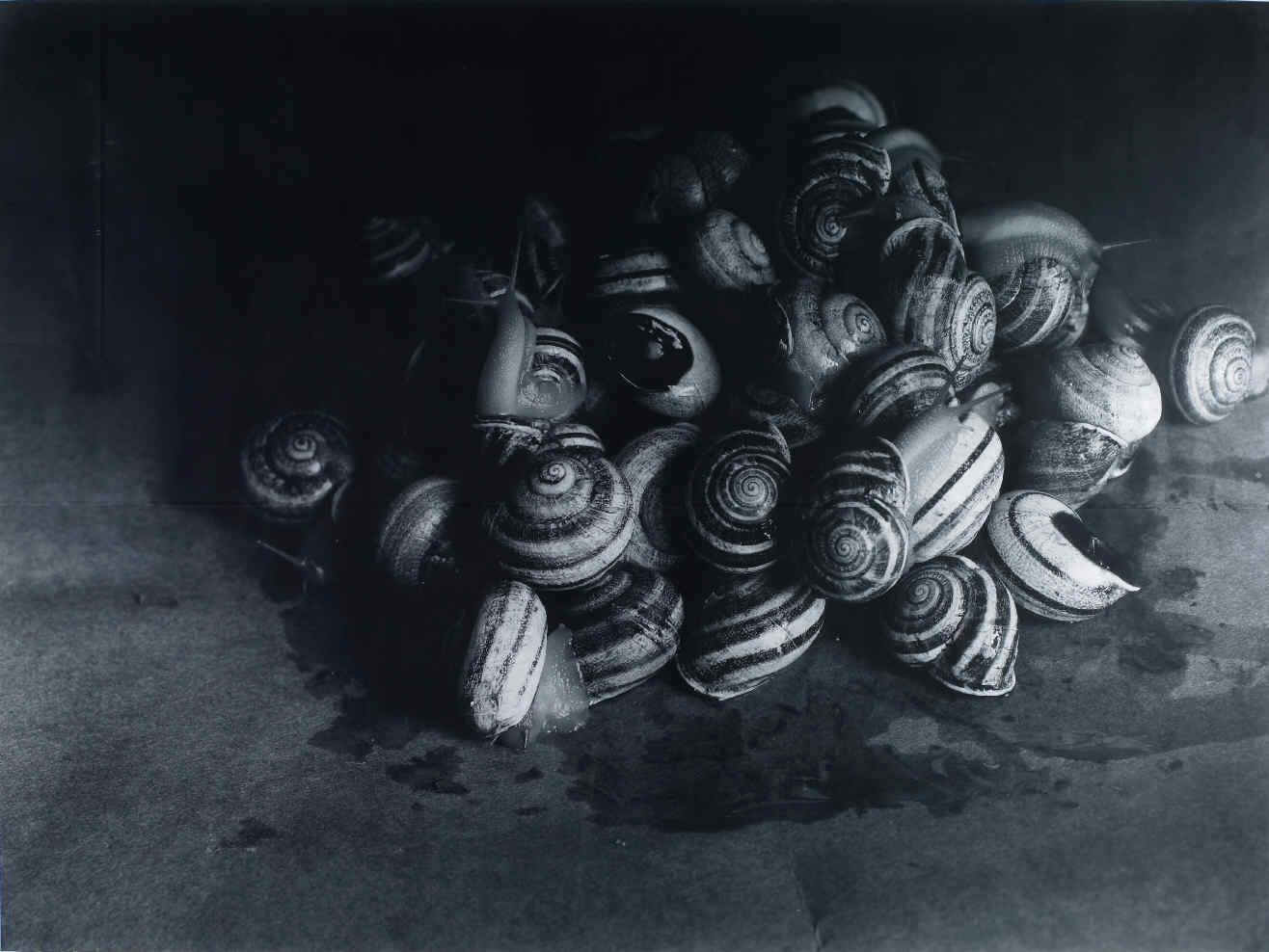 Snails [Caracoles]