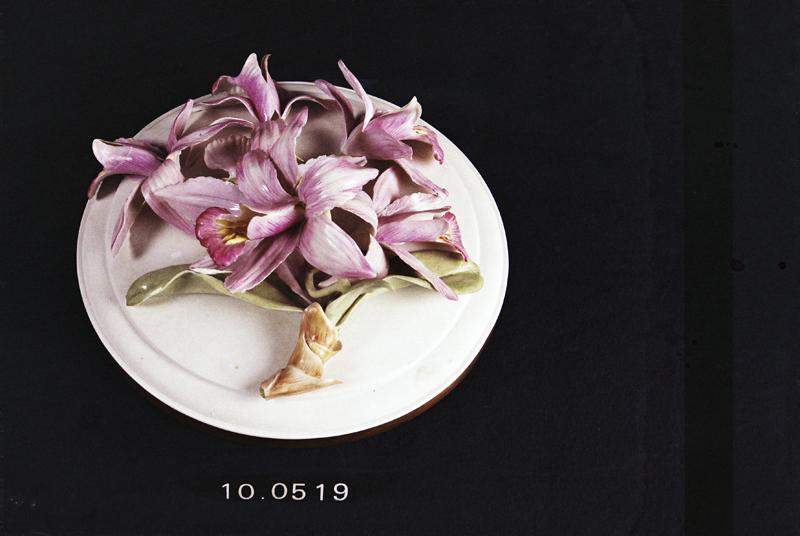 Placa con orquideas