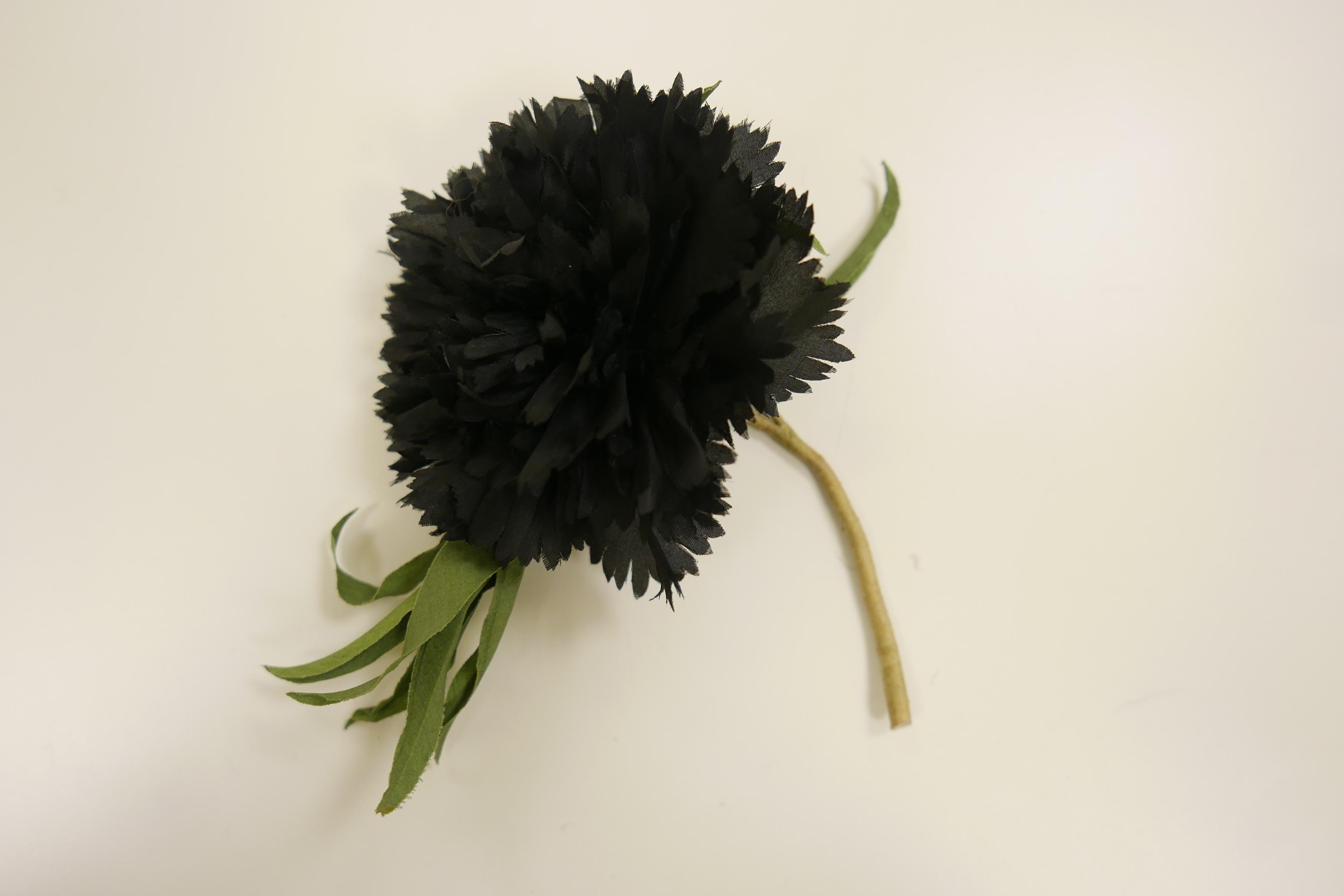 Crisantemo negro con hojas verdes