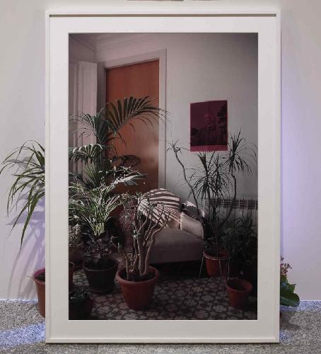 Hacer que las plantas crezcan protegidas por su imagen