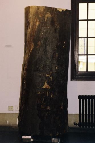 Fragmento del Árbol de Gernika, Árbol Nuevo