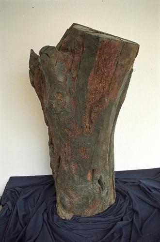 Fragmento del Árbol de Gernika (Árbol Viejo)