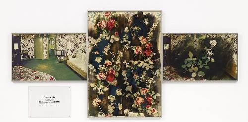 American Beauty Rose [La rosa American Beauty]