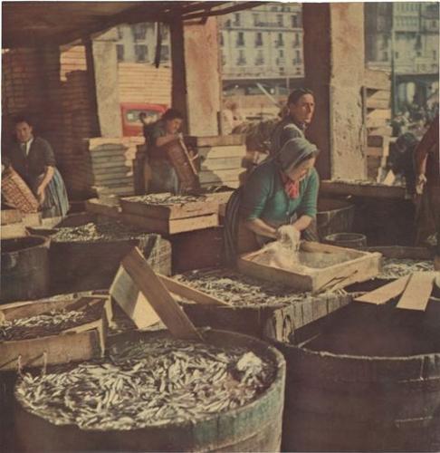 Preparando anchoa en salmuera en el puerto de San Sebastián