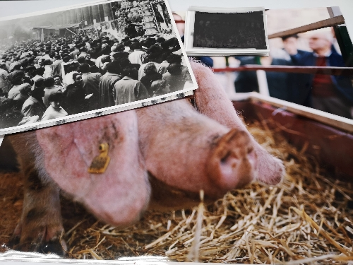 Mercado de Santo Tomas - Rifa del Cerdo (19)